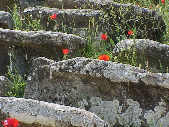 Poppies, stadium seats