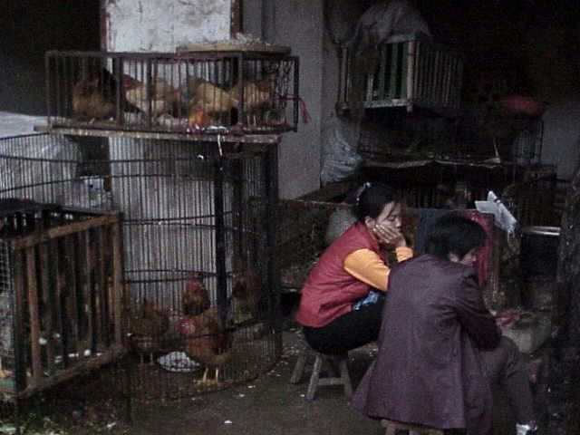 Chickens in cages Market  Guilin