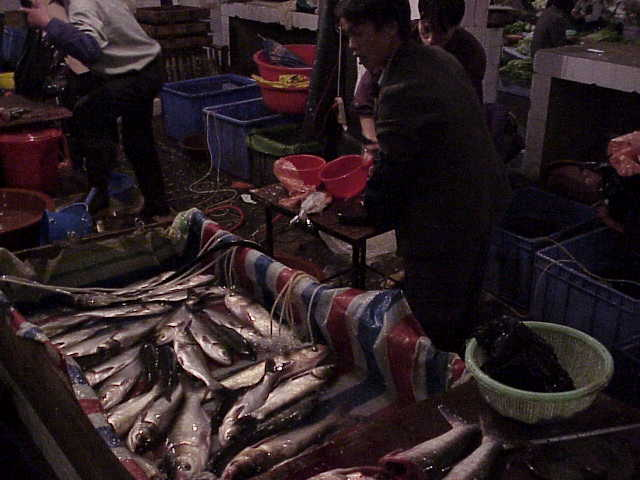 Selling fish      Market  Guilin